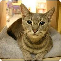 Adopt A Pet :: Cannolli - Jenkintown, PA