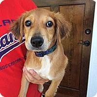 Adopt A Pet :: Addie - White River Junction, VT