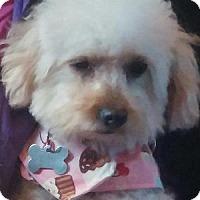 Adopt A Pet :: Megan - La Costa, CA