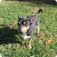 Adopt A Pet :: Sam - Cincinnati, OH - Dayton, OH