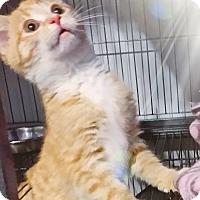 Adopt A Pet :: Cleopatra - Fairborn, OH