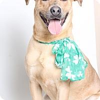 Adopt A Pet :: Jett - Covington, LA