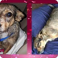 Adopt A Pet :: Fleur - Ringwood, NJ