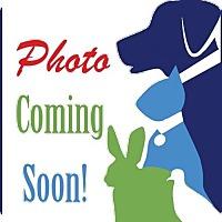 Adopt A Pet :: Thumper - Alexandria, VA