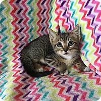 Adopt A Pet :: Octavia - Tampa, FL