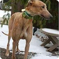 Adopt A Pet :: Cimmaron - Fremont, OH