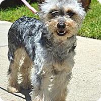 Adopt A Pet :: Talula - Los Angeles, CA
