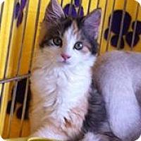 Adopt A Pet :: Jelly Bean M - Sacramento, CA
