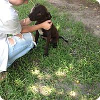 Adopt A Pet :: Curtis - richmond, VA