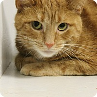 Adopt A Pet :: Dude - Medina, OH