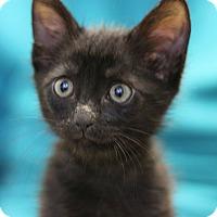 Adopt A Pet :: Bret - Canoga Park, CA