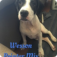 Adopt A Pet :: Wesson - Cheney, KS