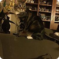 Adopt A Pet :: Elliot - Laguna Woods, CA