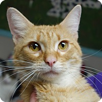 Adopt A Pet :: Hercules - Greenfield, IN
