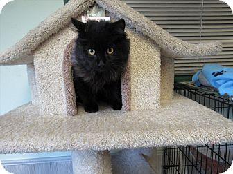 Domestic Longhair Kitten for adoption in Cannon Falls, Minnesota - Trucker