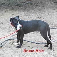 Adopt A Pet :: Bruno - Pensacola, FL