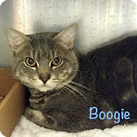 Adopt A Pet :: Boogie - El Cajon, CA