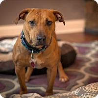 Adopt A Pet :: Nala - Mansfield, MA