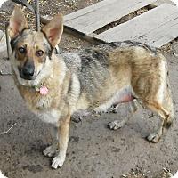 Adopt A Pet :: Kimber - Columbus, OH