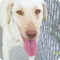 Adopt A Pet :: Blondie - Mexia, TX