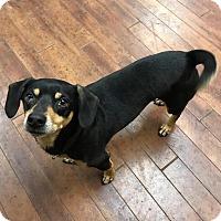 Adopt A Pet :: Hank - Charlotte, NC