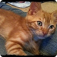 Adopt A Pet :: Kalamazoo - Austin, TX