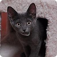 Adopt A Pet :: Fancy #3 - Lunenburg, MA