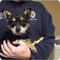 Adopt A Pet :: Cooper - Indianapolis, IN
