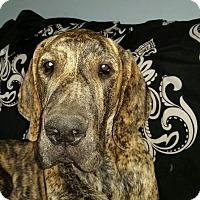 Adopt A Pet :: Gunner - Riverside, CA