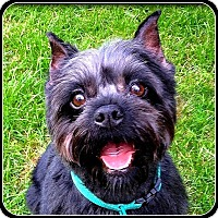 Adopt A Pet :: BELLA MARIE - ADOPTION PENDING - Seymour, MO