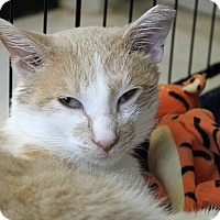 Adopt A Pet :: Modelo - Chicago, IL