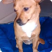 Adopt A Pet :: Big Boy - Woodland, CA