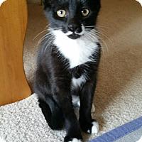 Adopt A Pet :: Zorro - Monroe, NC