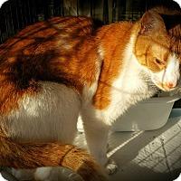 Adopt A Pet :: Jacob - Fairborn, OH