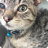 Adopt A Pet :: Andy - East Hanover, NJ