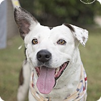 Adopt A Pet :: Romi - Kingwood, TX