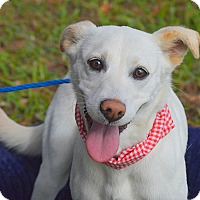Adopt A Pet :: Lulu - San Leon, TX