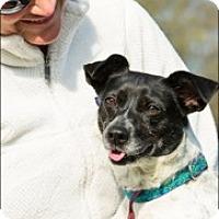 Adopt A Pet :: Noel - Memphis, TN