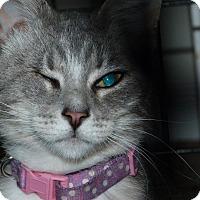 Adopt A Pet :: Dunkin - Stafford, VA