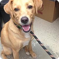 Adopt A Pet :: Cupcake - St. Francisville, LA