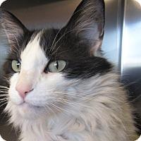 Adopt A Pet :: Buddy - Sierra Vista, AZ
