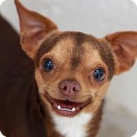 Adopt A Pet :: DIZZY - Kyle, TX