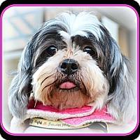 Adopt A Pet :: Sassie-VA - Mays Landing, NJ