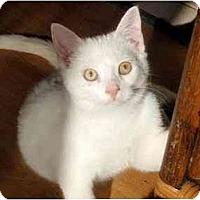 Adopt A Pet :: Caleb - Hamilton, ON