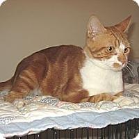 Adopt A Pet :: GARFIELD - 2013 - Hamilton, NJ