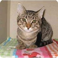 Adopt A Pet :: P.J. - Mesa, AZ