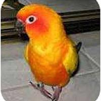Adopt A Pet :: TY & JEMA - Mantua, OH