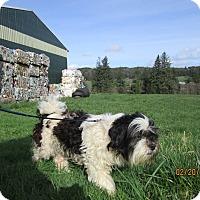 Adopt A Pet :: Gus - Tillamook, OR