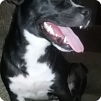 Adopt A Pet :: Lilly - Lakeville, MN