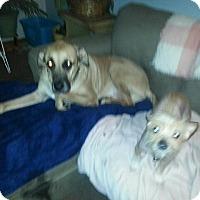 Adopt A Pet :: Courtesy Post) Gus - Upper Sandusky, OH